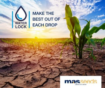 MAS Seeds WATERLOCK